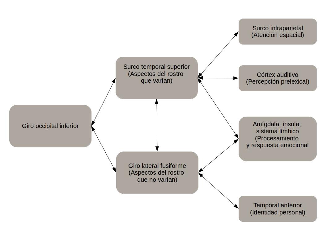 Modelo procesamiento emocional